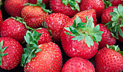 Sherry Hallemeier Prints - Strawberry Delight Print by Sherry Hallemeier