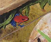 Dart Paintings - Strawberry Poison Dart Frog by Elizabeth Rieke Hefley