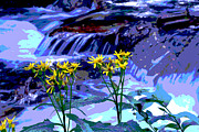 ZawHaus Photography - Stream and Flowers