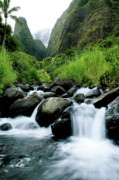 Charmian Vistaunet Posters - Stream flowing from Iao Needle Poster by Charmian Vistaunet