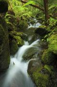 Quincy Dein Art - Stream in Iao Valley by Quincy Dein - Printscapes