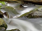 Moss Green Photo Framed Prints - Stream in Motion Framed Print by Jim DeLillo