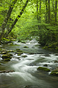Stream In The Smokies Print by Andrew Soundarajan