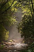 Tennessee River Photo Prints - Stream Light Print by Steve Gadomski