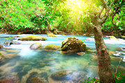 Jungle Beauty Art - Stream by MotHaiBaPhoto Prints