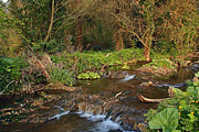 Martina Fagan - Stream near Broadboyne Bridge County Meath
