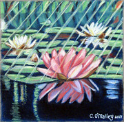 Lily Pastels Posters - Streaming Light and Reflections Poster by Carol OMalley
