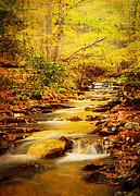 Beautiful Creek Posters - Streams of Gold Poster by Darren Fisher