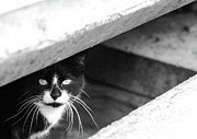 Canvas  Black And White Cat Photos - Street Cat by Julie Niemela
