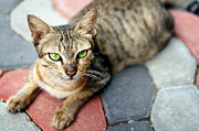 Green Eyes Posters - Street Cat On Concrete Blocks Poster by Carlina Teteris