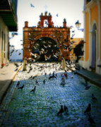Puerto Rico Photo Prints - Street Pigeons Print by Perry Webster