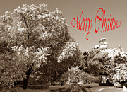Holiday Greetings Posters - Street Scene Merry Christmas Poster by Skip Willits