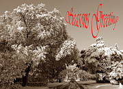 Holiday Greetings Posters - Street Scene Seasons Greetings Poster by Skip Willits
