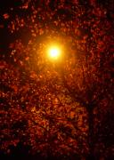 Night Lamp Framed Prints - Streetlamp Through Tree Framed Print by Utopia Concepts