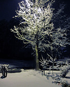 Snowy Night Prints - Streetlighted Tree Print by Charles  Carlos Odom