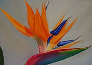 Interior Design Painting Posters - Strelitzia Poster by Pera  Schillings