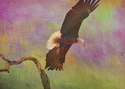 Raptor Mixed Media Prints - Strength and Courage Print by Deborah Benoit