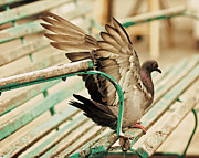 Darlene Terry Metal Prints - Stretch Your Wings Metal Print by Darlene Terry