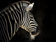 Animus Photography Prints - Striped Print by Animus Photography