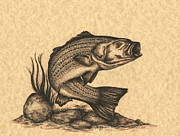Bass Drawings Prints - Striped Bass Print by Kathleen Kelly Thompson