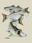 Kevin Brant Paintings - Striped Bass by Kevin Brant
