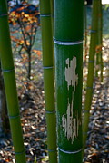 Darren Cole Butcher - Stripped Bamboo