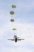 Paratrooper Photo Prints - Students Jump From A C-130 Hercules Print by Stocktrek Images