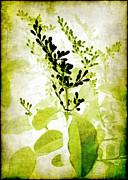 Study In Green Print by Judi Bagwell