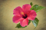 Hibiscus Metal Prints - Study in Scarlet Metal Print by Jeff Kolker