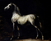 Coat Metal Prints - Study of a Dapple Grey Metal Print by Theodore Gericault