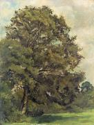 Paper Framed Prints - Study of an Ash Tree Framed Print by Lionel Constable