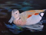 Waterfowl Paintings - Study of South American Ringed Teal by Carol Reynolds