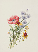 Wild Flowers Paintings - Study of wild flowers by English School
