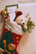 Christmas Bear Ornament Posters - Stuffed Christmas Stocking Poster by Carson Ganci