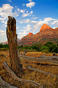 Stump Framed Prints - Stumped at Zion Framed Print by Peter Tellone