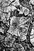 Tree Roots Prints - Stumped Print by Mike McGlothlen
