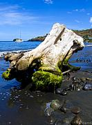 Beached Photos - Stumped by Sarita Rampersad