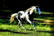 Black Stallions Prints - Stunner in the Sunshine Print by Emily Stauring