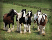 Gypsy Horse Prints - Stunning Beauty Print by Terry Kirkland Cook
