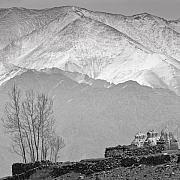 Snow. Mountain Photos - Stupa and Trees by Hitendra SINKAR