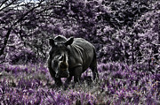 Rhinoceros Photo Posters - Styled Environment-The Modern Trendy Rhino Poster by Douglas Barnard