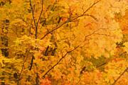 Stylized Photography Posters - Stylized Autumn Leaves Poster by Gregory Scott