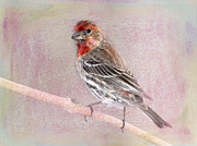 House Finch Framed Prints - Sublime Framed Print by Betty LaRue