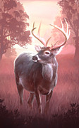 White-tail Deer Prints - Subtle Moment Print by Joel Payne