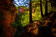 Canyon Framed Prints - Subway Forest Framed Print by Chad Dutson