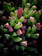 Xueling Zou - Succulent 5