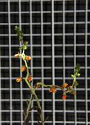 Xueling Zou - Succulent 7