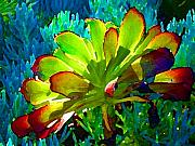 Pond Nature Landscape Digital Art Acrylic Prints - Succulent Backlit on Blue 1 Acrylic Print by Amy Vangsgard