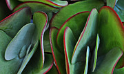 Red And Green Photo Metal Prints - Succulent Metal Print by Mary Machare