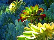 Succulents Landscape Posters - Succulents Backlit on Blue 2 Poster by Amy Vangsgard